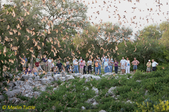 Many thousands of people enjoy bats closeup without harm, from America to Australia, Asia and Africa