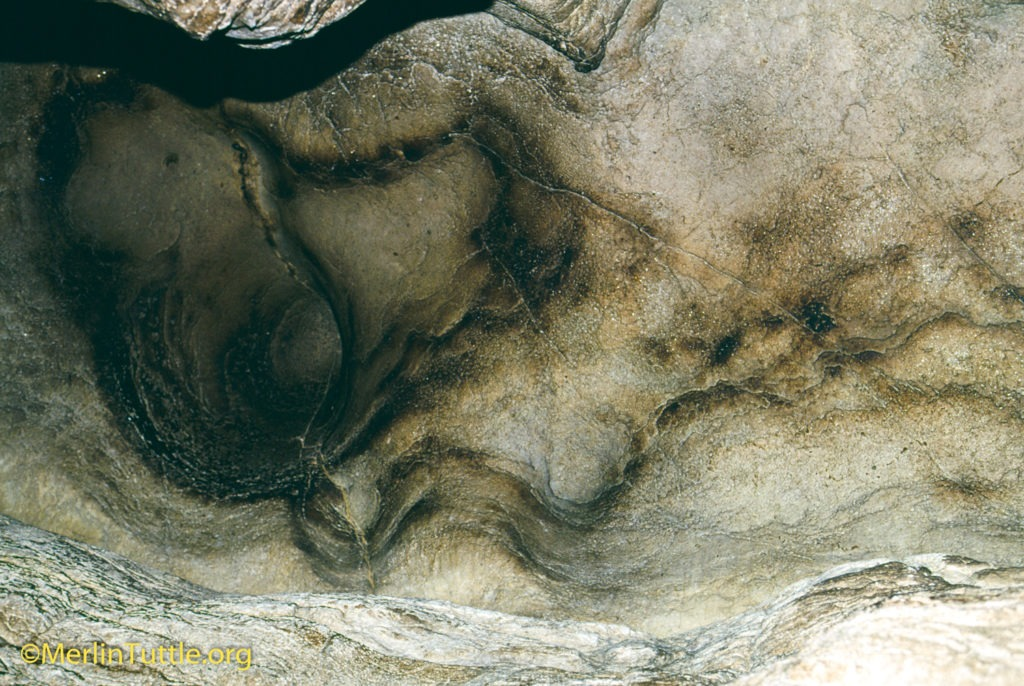 bat droppings, called guano, on cave floors