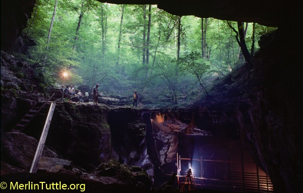 Conservation Ecology of Cave Bats