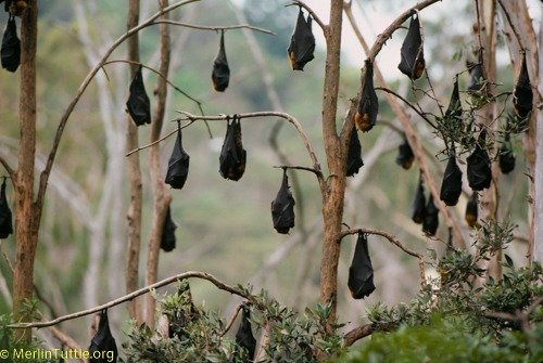 Impacts of climate change on bats