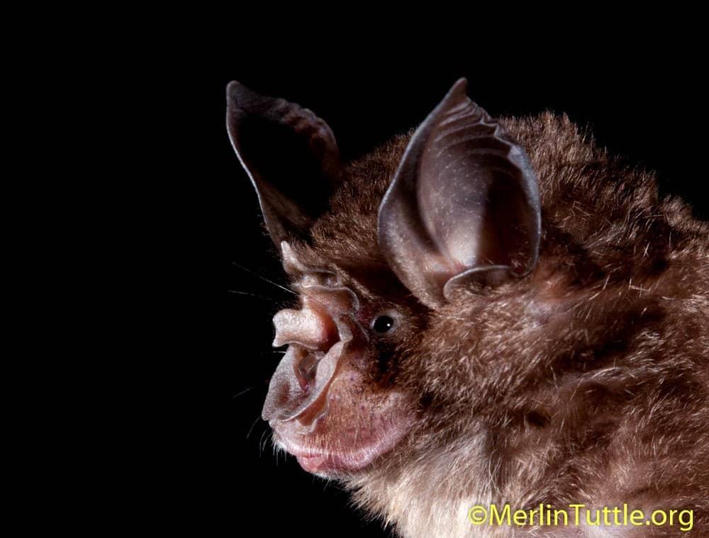 COVID-19 Coronavirus Leads to More Premature Scapegoating of Bats